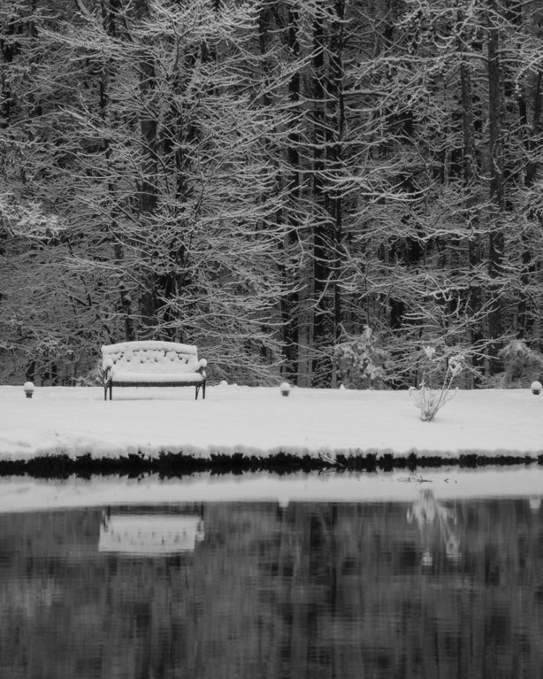 The Quiet Bench
